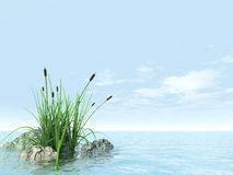 Stones grasses and canes. In an environment of water and sky Royalty Free Illustration