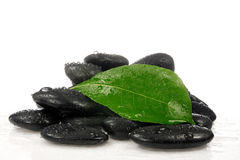 Stones with a green leaf. Royalty Free Stock Photos