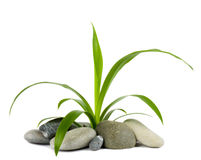 Stones and green plant Stock Images