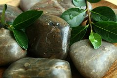 The stones and the green sheets royalty free stock photo