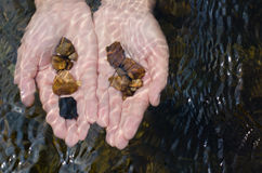 Stones In Hands Under Clear Water. Royalty Free Stock Images