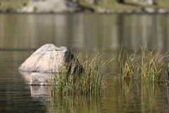 Stones and herbs on a lake. Stones and herbs on a mountain lake Royalty Free Stock Photos