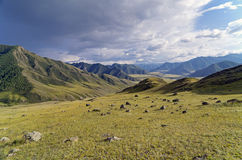 The stones on the hillside.  Altai, Russia. Royalty Free Stock Image