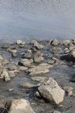 Stones in the lake hula north Israel Royalty Free Stock Photography