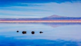 Stones in a lake. Stones in a lagoon in Atacama desert stock image