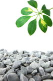 Stones and leaf Stock Photo
