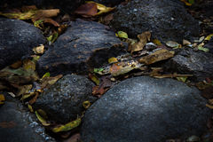 Stones and leaves. Stones cover with yellow leaves in autumn stock photo