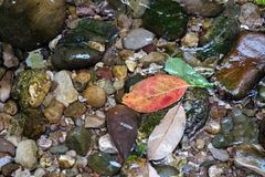 Stones with leaves Royalty Free Stock Photography