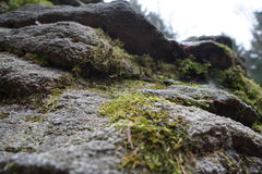 Stones looking up. Looking up along rock with some moss on Royalty Free Stock Photo