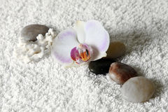 Stones for massage Royalty Free Stock Photos