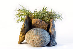Stones and a moss Royalty Free Stock Images