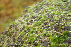 Stones and moss Stock Photography
