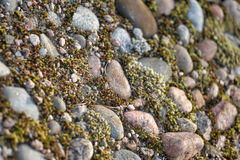 Stones and moss background Royalty Free Stock Images