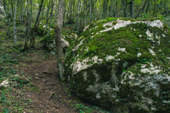 The Stones and the Moss. The stones covered with moss in the forest in Sokobanja, Serbia Royalty Free Stock Photo