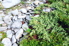 Stones and moss in Lapland Royalty Free Stock Image