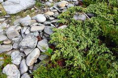 Stones and moss in Lapland Stock Images