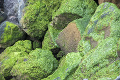 Stones with moss Stock Images