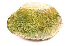 Stones with moss on white background. Stock Photos