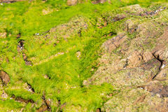 Stones and mosses Stock Images