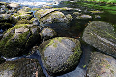 Stones in a mountain river moss Royalty Free Stock Image