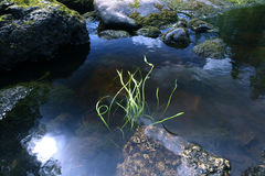 Stones in a mountain river moss Stock Photo