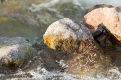 Stones in the mountain river. In the park in nature Stock Image