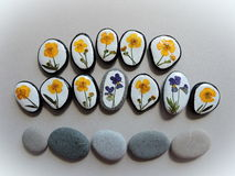 Stones with natural flowers Stock Photos