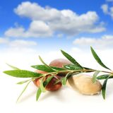 Stones and olive branch. Stock Photography