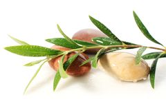 Stones and olive branch. Royalty Free Stock Photo
