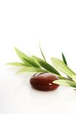 Stones and olive branch. Royalty Free Stock Images