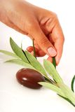 Stones and olive branch. Stock Photo