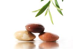 Stones and olive branch. Stock Photos