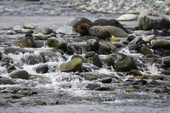 Free Stones On The Riverbed Stock Images - 172688144