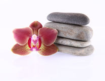 Stones and orchid Royalty Free Stock Images