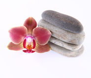 Stones and orchid Royalty Free Stock Photo