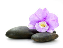 Stones and orchid Royalty Free Stock Image