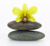 Stones and orchid Stock Photos