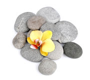 Stones with orchid Royalty Free Stock Images