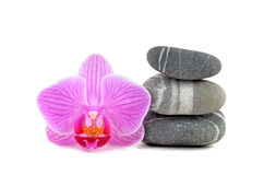 Stones with Orchid Stock Photos