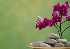 Stones with orchid Stock Photography