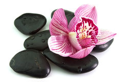 Stones with orchid flower Stock Images