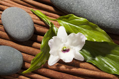 Stones with orchid flower, Japan style of composition. Stock Images
