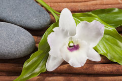Stones with orchid flower, Japan style of composition. Royalty Free Stock Image