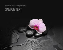Stones and orchid with water drops Royalty Free Stock Photo