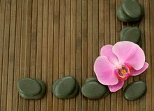 Stones and orchid on a wooden Stock Images