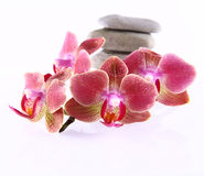 Stones and orchids royalty free stock photos
