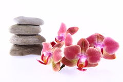 Stones and orchids Royalty Free Stock Images