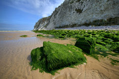Stones, overgrown with green algae on sea coast, France. Royalty Free Stock Photography