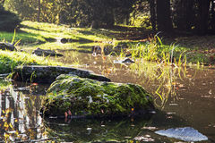Stones overgrown with moss in a creek Stock Images