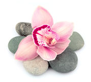 Stones and pink orchid flowers Stock Photography
